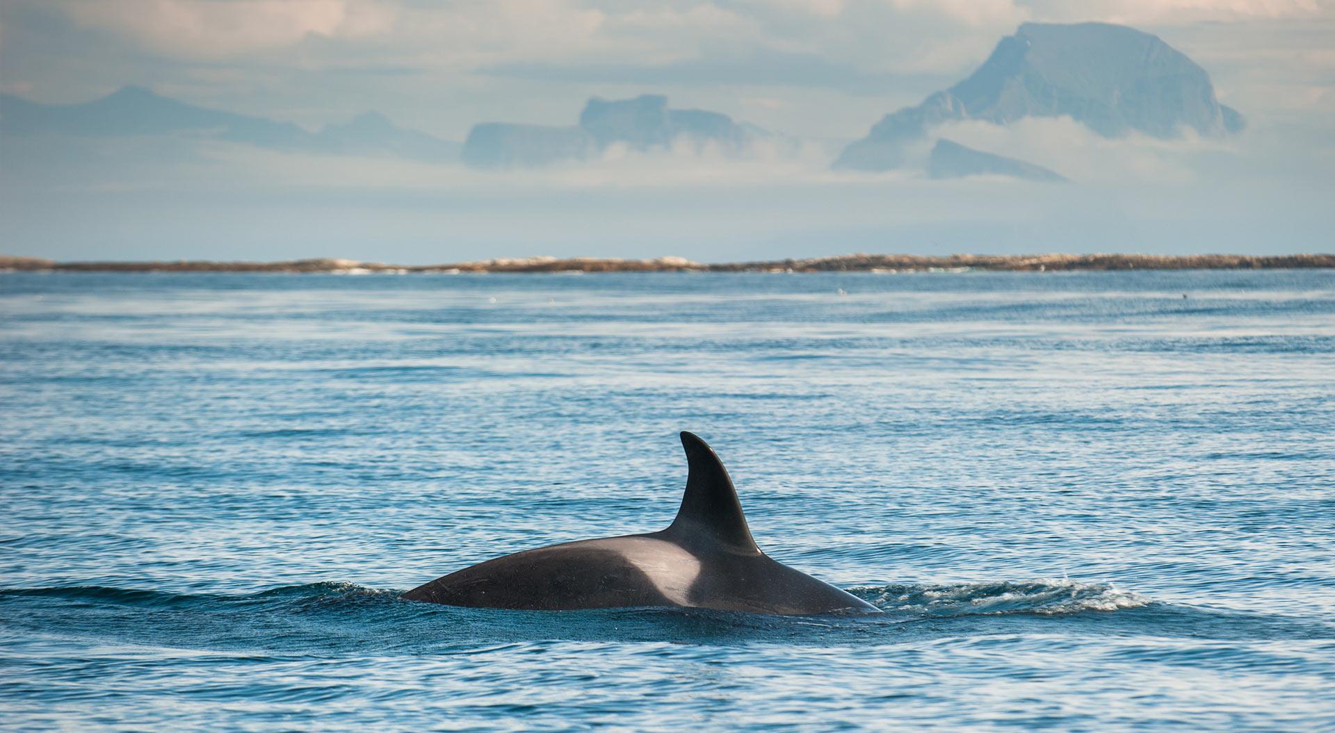 Whale Watching Guarantee